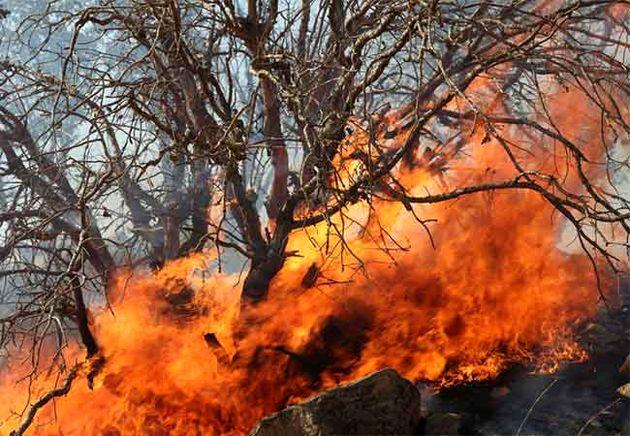 جان باختن 4 شهروند مریوانی در آتش سوزی جنگل های مریوان