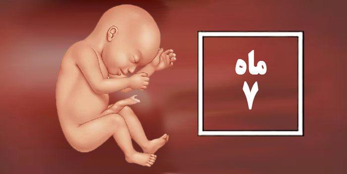 جنین هفت ماهه دختر