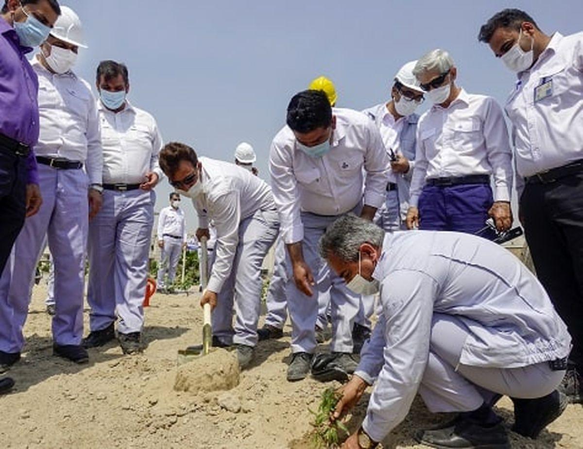 هزار اصله درخت گلپرک در پالایشگاه ستاره خلیج فارس کاشته شد