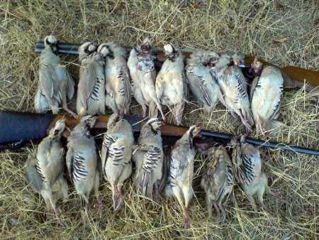 دو متخلف شکار پرندگان وحشی در پارک ملی کلاه قاضی اصفهان دستگیر شدند