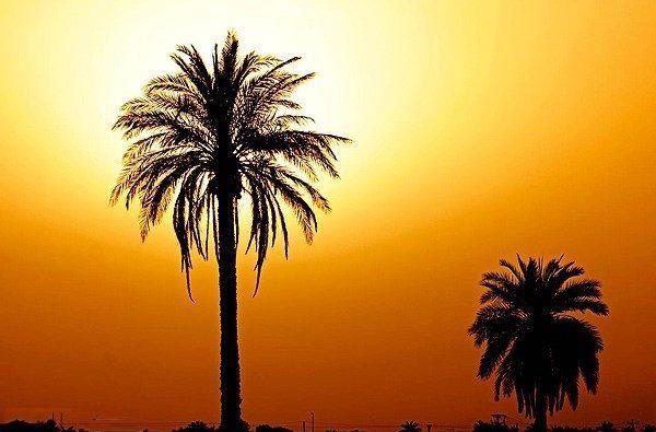هرمزگان گرم تر می شود/ دریای عمان و شرق تنگه هرمز مواج می شود