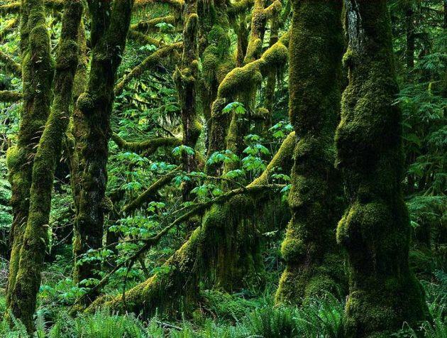 جنگل های شمال در معرض خطری بزرگ/ شب پره ها بلای جان جنگل های گیلان