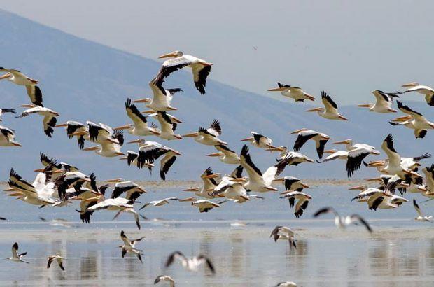 آگاهی درباره آنفلوانزای پرندگان با توجه به فصل کوچ ضروری است