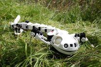 ساخت رباتی که مانند سمندر عمل می کند