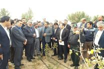 بازدید وزیر جهاد کشاورزی از مزرعه الگویی خارشتر در شهرستان قاینات