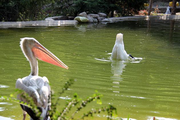 اینجا جزیره ای نا شناخته است / آیا باغ پرندگان تهران موفق بوده است؟