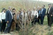 وزیر جهاد کشاورزی از طرحهای شاخص بازدید کرد
