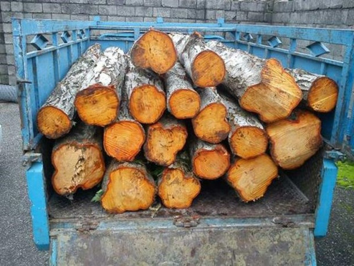 2 تن چوب قاچاق در محمودآباد کشف و ضبط شد