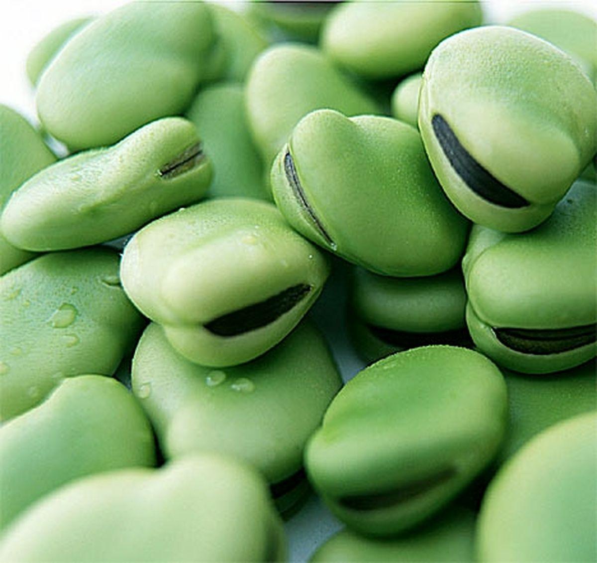 پیش بین تولید 150 تنی باقلا در نکا