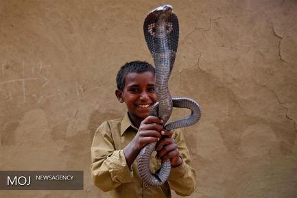 بازی با مار در هند