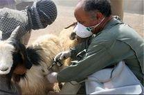 واکسیناسیون یک میلیون رأس دام سبک استان علیه تب برفکی
