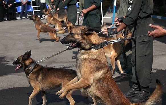 مرکز سگهای موادیاب راهاندازی میشود