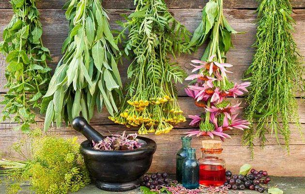 تایید ۱۳۴ استاندارد شغلی در حوزه گیاهان دارویی و طب سنتی
