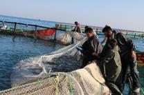 پیشبینی تولید 200 هزار تن ماهی در قفس در برنامه ششم توسعه کشور