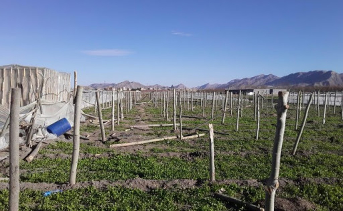 ۱۵ گلخانه سنتی در شهرستان فلاورجان تخریب شد