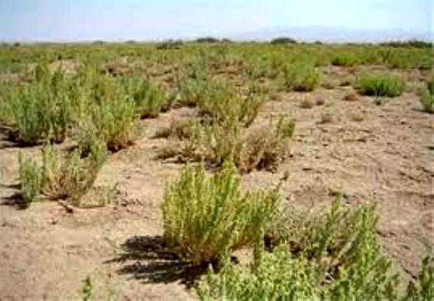 اجرای طرح بیابان زدایی در شرق اصفهان و برخوار