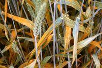 چشم انداز روشن کشاورزی استان همدان در سایه توسعه پایدار و افزایش بهره وری