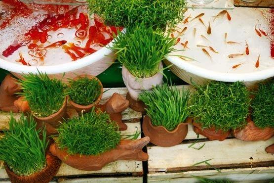 پسماند خشک بدهید، ماهیقرمز، گلدان و سبزهی عید بگیرید