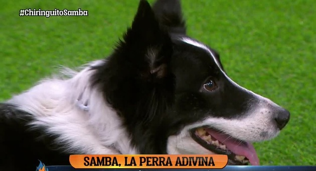 پیش بینی  سگ پیشگوی اسپانیایی از بازی ایران و اسپانیا