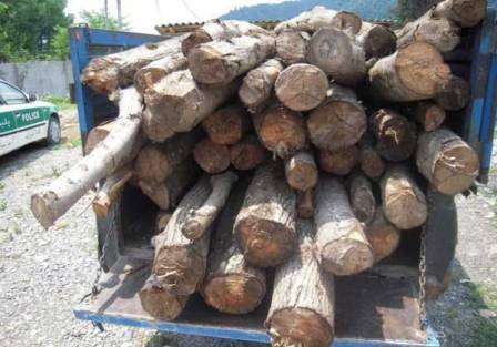 دستگیری متخلف قاچاق چوب در شهرضا