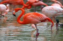 5 شکارچی غیرمجاز در خلیج گرگان شناسایی و دستگیر شدند