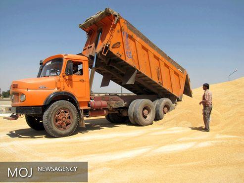 خرید گندم مازاد بر نیاز کشاورزان از مرز ۴٫۲ میلیون تن فراتر رفت