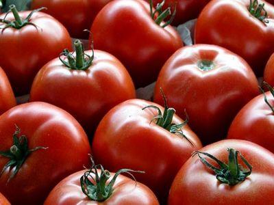 عدم مدیریت صحیح صادرات دلیل گرانی گوجه فرنگی/اعتصاب کامیون داران تاثیر اندکی بر قیمت گوجه گذاشته است
