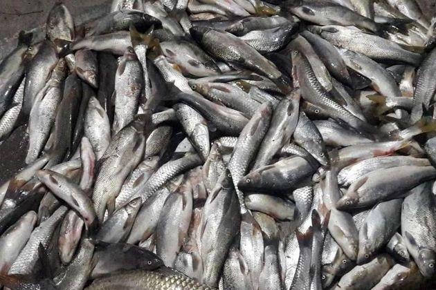 توقیف محموله دو تنی ماهی فاسد توسط ماموران پلیس راه