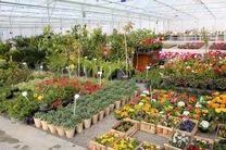 محمودآباد میزبان سومین جشنواره و نمایشگاه گل و گیاه زینتی شد