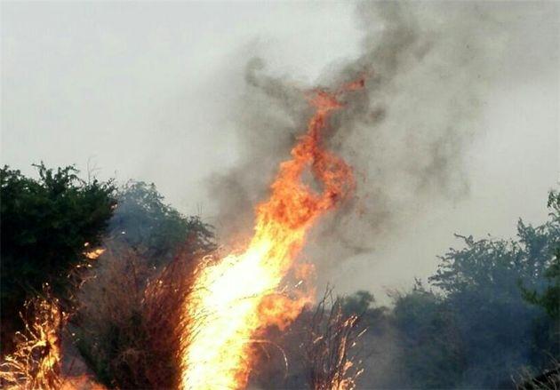 احتمال وقوع آتش سوزی در جنگلها به دلیل افزایش دما