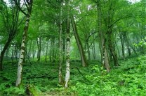 میزان دام در گلستان ۲.۴ برابر ظرفیت مراتع استان است