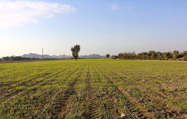 بحث بر سر یک زمین کشاورزی به درگیری و زخمی شدن 11 نفر در هفتکل منجر شد