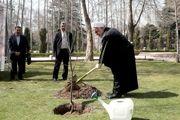 کاشت نهال سیب توسط رییس جمهور به مناسبت روز درختکاری