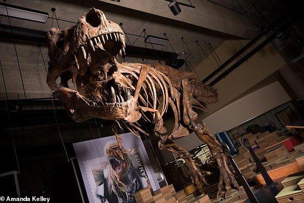 کشف فسیل یک دایناسور 66 میلیون ساله در کانادا