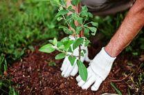 هدف از تولید نهال، توسعه جنگلها و فضای سبز شهرهای لرستان است