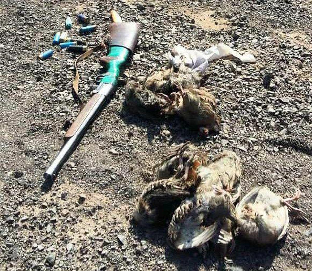 دستگیری یک متخلف شکار پرندگان وحشی در اردستان