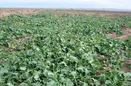 100 اپلیکیشن آموزشی و ترویجی کشاورزی تولید می شود
