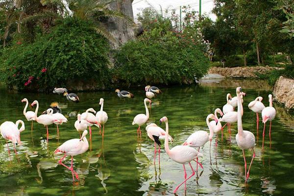 باغ پرندگان میبد با وسعت هزار و ۵۰۰ مترمربع بهره برداری شد