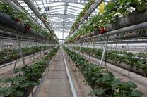 توسعه گلخانهها در کرمانشاه مسیر اقتصادی را هموار میکند