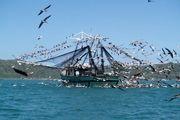 توقیف کشتی صیادی چینی در آب های جاسک