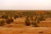۲۵۰ میلیارد ریال در سفر رییس جمهور در بخش بیابان یزد مصوب شد