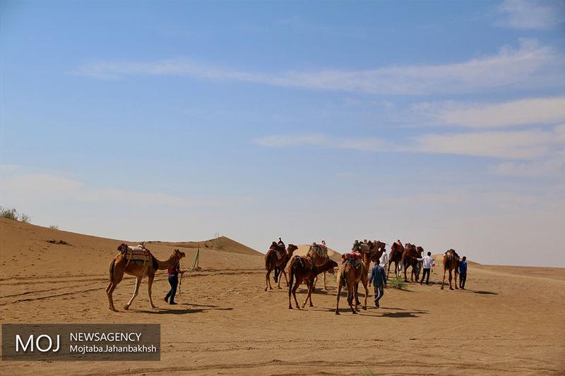 اجاره مراتع کشور به شترهای قطری تکذیب شد