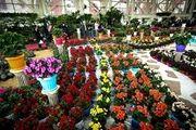سمپوزیوم بینالمللی گل و گیاهان زینتی در رامسر برگزار می شود