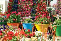 واردات بی رویه و قاچاق گل تولیدکننده داخلی را با مشکل روبرو کرد