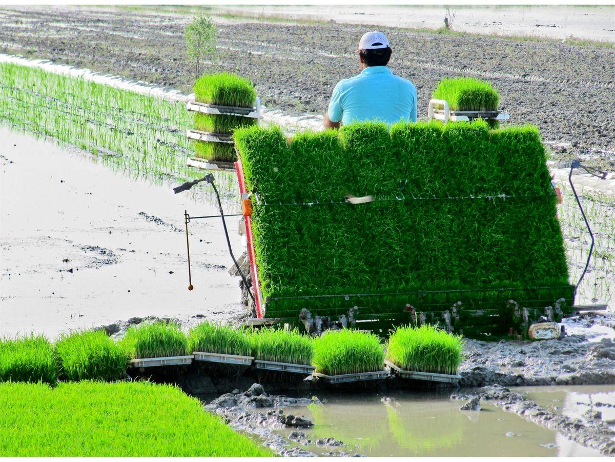 سامانه جامع مدیریت بانکهای نشاء برنج کشور طراحی و تولید شد