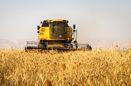 برداشت 17 هزار تن جو و گندم از مزارع آران و بیدگل