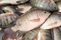 7 فایده مهم مصرف ماهی را بشناسید