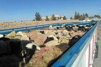 توقیف احشام قاچاق به ارزش 250 میلیارد ریال توسط مرزبانان کردستانی
