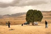 ثبت تک درخت به نام عباس کیارستمی / نصب مجسمه کیارستمی در زیر تک درخت