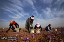 قیمت زعفران یک میلیون افزایش یافت